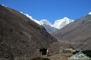 Mt. Everest information with Everest base camp treks and tour packages