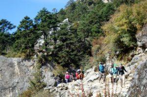 Dense Pine Forest on Everest base camp trail