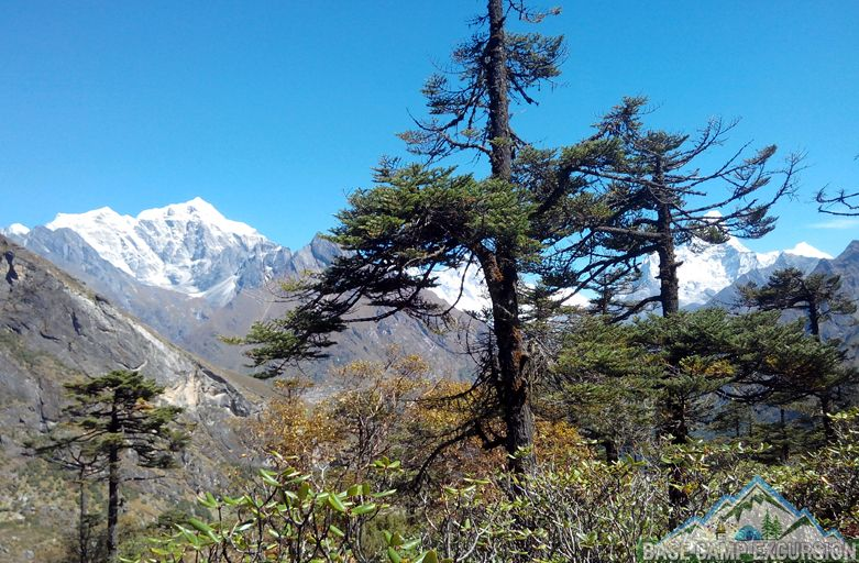 plants found on Mount Everest - Mount Everest flora and fauna
